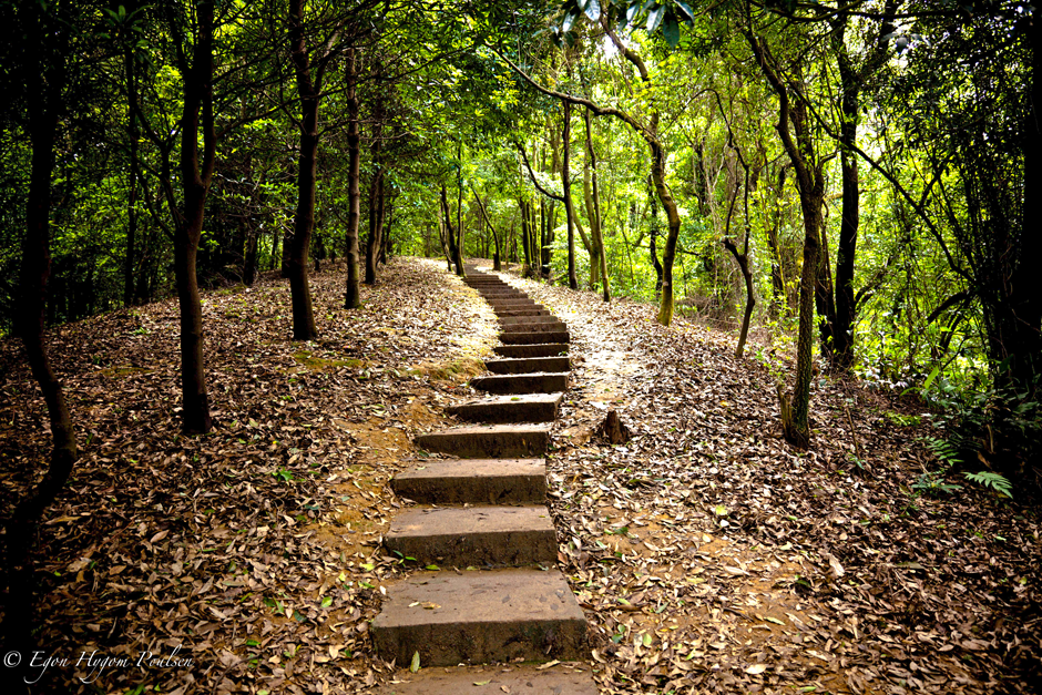 stairs-in-the-forest
